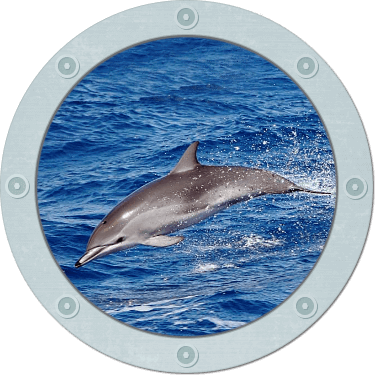 Stormy Petrel offers large group specialty cruises for tourists to view jumping Bottlenose Dolphin, bird watching and even family celebrations.