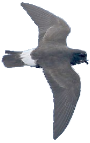 Stormy Petrel supports all tourism in and near Hatteras, Frisco, Buxton, Avon, Salvo, Waves and Rodanthe NC on the Outer Banks