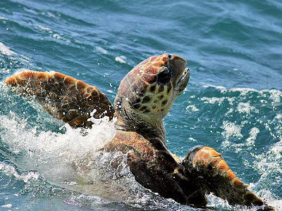 Bird watching and sea life group charters are available to view Sea Turtles out of Hatteras Inlet.
